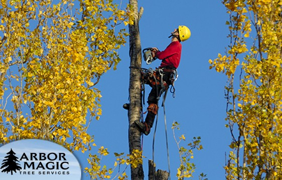 Working With a Certified Arborist